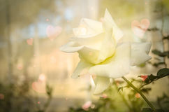 Fleur de rose de jaune avec le foyer mou pour un amour romantique Photo stock
