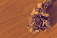 Fleur de rose de noir Photos libres de droits