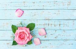 Fleur de rose de rose sur le bois bleu en pastel Photo stock
