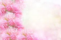 Fleur de rose de rose sur le fond mou de vintage de bokeh pour la valentine Photos stock