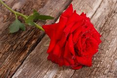 Fleur de rose de rouge avec des baisses de rosée sur un vieil en bois Image libre de droits