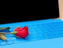 Fleur de rose de rouge sur l'ordinateur portable bleu de typer Photos stock