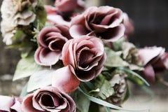 Fleur de Rose plantée Photos stock