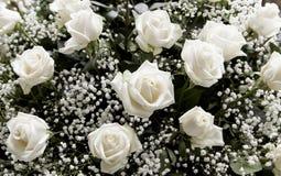 Fleur de Rose plantée Photos libres de droits