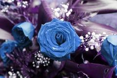 Fleur de Rose plantée Image libre de droits