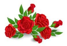 Fleur de rose de rouge avec le bourgeon et la feuille Images stock