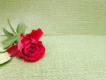 fleur de rose de rouge, pour des annonces ou des messages de l'amour, avec le fond vert clair Image libre de droits