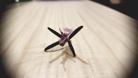 Fleur de Rosemary Image libre de droits