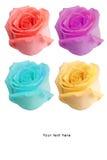 Fleur de roses pour le Saint Valentin d'occasion spéciale Photos stock