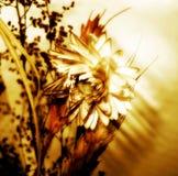 Fleur de sépia Image libre de droits