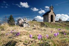 Fleur de safran à la source Photo libre de droits