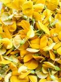 Fleur de Sesbania Images stock
