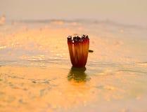 Fleur de Simul à la banque d'une rivière - photographie courante Images libres de droits