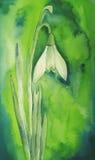 Fleur de Snowdrop Photo libre de droits