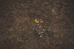 Fleur de solitude Photos stock