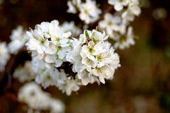 Fleur de source Photo libre de droits