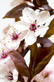 Fleur de source images libres de droits