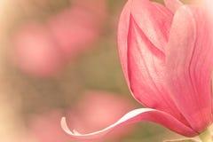 Fleur de source Images stock