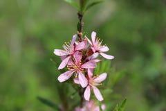 Fleur de source Image libre de droits