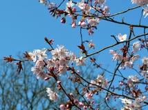Fleur de source Photographie stock