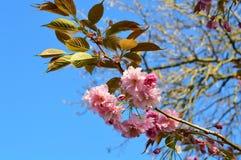 Fleur de source Photographie stock libre de droits