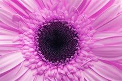 Fleur de source Photos libres de droits