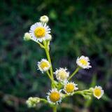 Fleur de sourire Photos stock