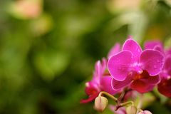 Fleur de sourire Images stock
