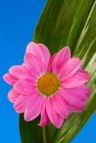 Fleur de station thermale Photographie stock
