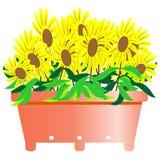 Fleur de Susan observée par noir Image libre de droits