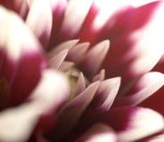 Fleur de Texure Photos stock