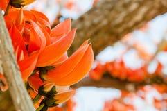Fleur de Thongkown Photos stock