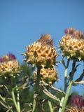 Fleur de Throned Photographie stock libre de droits