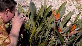 Fleur de tir d'oiseau de paradis d'homme avec la caméra de cru clips vidéos