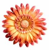 Fleur de tissu d'isolement sur le blanc Image stock