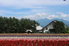 Fleur de Tomita de ferme au Hokkaido Japon Images libres de droits