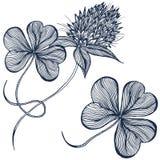 Fleur de trèfle de dessin Photo libre de droits