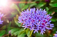 Fleur de transitoire photos libres de droits