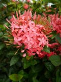 Fleur de transitoire images stock