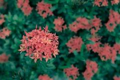 Fleur de transitoire image libre de droits