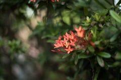Fleur 2 de transitoire Image libre de droits