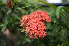Fleur de transitoire Photographie stock