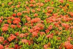 Fleur de transitoire photo stock