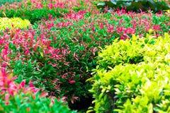 Fleur de transitoire de feuille dans le sumer sping après avoir plu pendant le matin image libre de droits