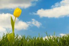 Fleur de tulipe Photographie stock