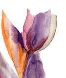Fleur de tulipe bleue Photos libres de droits