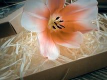 Fleur de tulipe sur les planches foncées en bois de grange Photographie stock