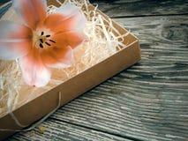 Fleur de tulipe sur les planches foncées en bois de grange Photo stock