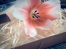 Fleur de tulipe sur les planches foncées en bois de grange Image stock