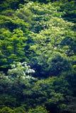Fleur de Tung dans la forêt images stock
